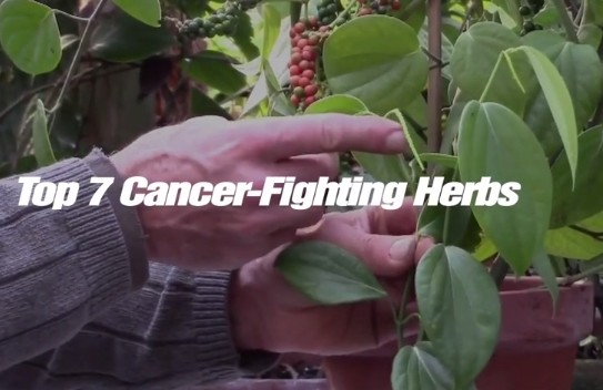 Cancer Fighting herbs