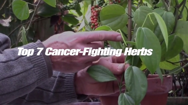 Top 7 Cancer-Fighting Herbs (Video)