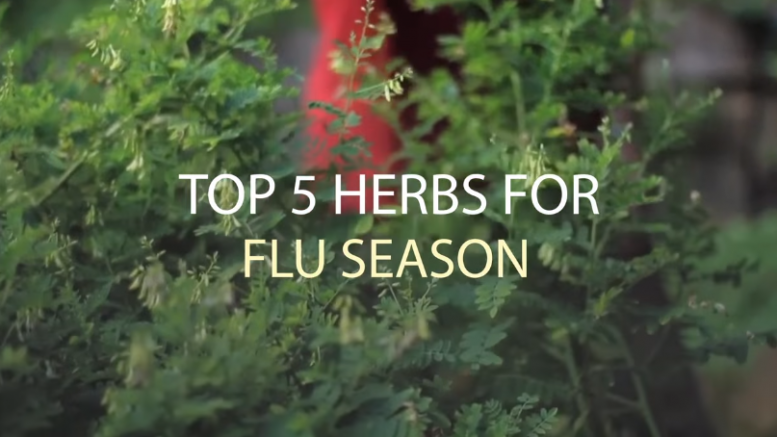 Top 5 Herbs for Flu Season (Video)